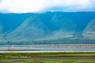 Pink Flamingos in Ngorongoro Crater -