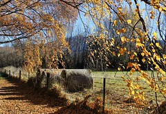 Autumn...... (flying-leap) Tags: newzealand canon canon60d 60d nz 18200mm autumn 4autumn 4seasons seasons leaves trees happyfencefriday hff fences fence