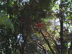 Serre tropicale - Parc zoologique de Paris (stefff13) Tags: parc zoologique paris zoo animals animal animaux france serre tropicale