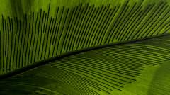 Green Leaf Patterns (Bill Gracey 15 Million Views) Tags: leaf leaves green patterns composition sandiegobotanicgarden balboapark sandiego nature naturalbeauty