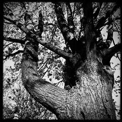 Un arbre, c'est une bouffée d'oxygène... (woltarise) Tags: arbre hauteur montréal rosemont rue beauté oxygène