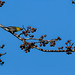 Cuba: Yellow-headed Warbler