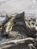 (Turbogirlie) Tags: borth ceredigion seaside walescoastalpath ancientforest petrifiedforest beach wales welshcoast