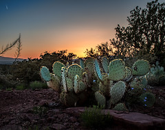 Prickly Pear Sunset (jn3va) Tags: pricklypear cactus sedona sunset az