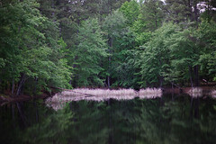 walk about Harris Lake 44 (furrycelt) Tags: harrislake newhillnc nikon85mmf14afd nikon85mmf14 northcarolina shearonharrisreservoir ianwilson jianwilson photographersoftumblr 85mm d600 nikon forest furrycelt lake lensblr natural nature trees water woods