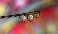 Trip Drop (nicklucas2) Tags: macro needle water waterdrop