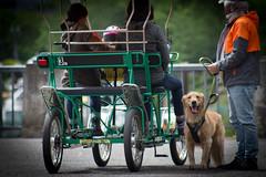 IMG_0069 (jamie minamide) Tags: vacation portland oregon nature outdoors naturallighting animals cute dog puppy