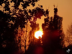 Tramonto d'autunno. Milano (diegoavanzi) Tags: milano milan tramonto sunset sole sun alberi trees foglie leaves lombardia lombardy italia italy autunno autumn fall sony hx300 bridge