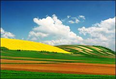 Green field 05 (Katarina 2353) Tags: vojvodina serbia katarina2353 katarinastefanovic