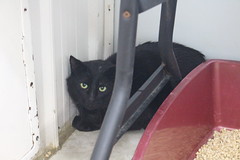 Kerry - 3 year old neutered male