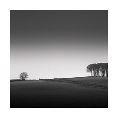 The Outcast (Nick green2012) Tags: copse landscape blackandwhite square minimal trees cornwall