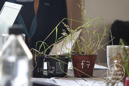 grassisgreener_01