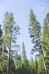 Yosemite // Part 1 (Mariana Warne) Tags: yosemite national park canon canon6d california sunnycalifornia southerncalifornia nature naturallight landscape mountain pines pinetrees bluesky falls trip marianawarne signofspring spring sunshine sandiego sandiegophotographer escondido escondidophotographer
