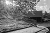 Tierpark 7 (FSR Photography) Tags: bw blackandwhite blackwhite bäume sw schwarzweis schwarzweiss monochrome monochrom canon canon400d canondslr clouds wolken wald hütte holzhütte cabin leaves laub blätter tierpark fsr fsrphotography
