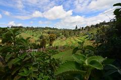 Garden-like countryside (supersky77) Tags: timboroa kenya camoagna countryside crops verde green africa lush rigoglioso fertile