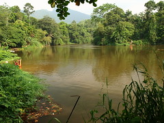 Film location (jeff.dugmore) Tags: srilanka asia tropical tropics river film filmlocation bridgeovertheriverkwai water trees ceylon nature outdoor outside olympus riverbank green travel walk hike jungle forest plantation hillside foothills reflection bathing kitulgala riverkelani kalugale