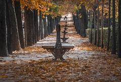 The autumn of Madrid (pelpis) Tags: autumn autumnlandscape landscape autumnscene autumnmadrid nature naturescene park retiro parquedelretiro madrid spain orange
