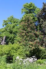 Warsaw University Botanical Garden, Poland (LeszekZadlo) Tags: park garden green verde nature natureza naturaleza flowers color travel landscape landschaft paisaje sprimg polska poland polonia pologne polen mazowsze mazovia warschau varsovie warszawa trees europe eu ue
