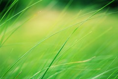 Hair of the world - Les cheveux du monde (Philippe Meisburger Photo) Tags: nature herbe grass macro green vert graphic abstract spring springtime printemps villageneuf hautrhin alsace grand est france europe philippe meisburger 2017