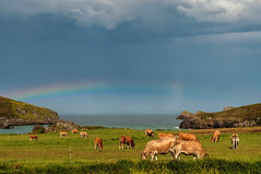 Troenzo, Llanes (ccc.39) Tags: asturias llanes troenzo prado vacas mar cantábrico nuboso nubes arcoiris rainbow costa