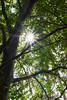 Sunbeams (grundi1) Tags: sony alpha 68 a86 ilca 1770 f2845 dc baum sonne tree sun sunbeams sonnenstrahlen laub leaf sigma1770f2845dcmarco sigma vanagram nature grün green