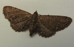 Anglų lietuvių žodynas. Žodis moth reiškia n 1) kandis; 2) drugelis lietuviškai.