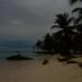 Coconut Trees Bathing in Moonlight