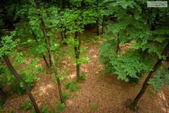 Wald (ab-planepictures) Tags: wald bäume baum laub laubbaum blätter deutschland
