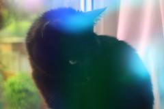 bella (geetakesphotos) Tags: holographic foil photography techniques experiments nostalgic colourful vibrant cats pets black cat