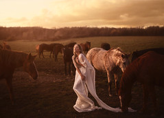Seek and return (aleah michele) Tags: horse horses forest fairytale fantasy field gold golden goldenhour girl story sunset silverhair whitedress whimsical whitehair magical magic conceptual conceptualportrait concept