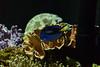 M00_4315.jpg (M. Jarrett) Tags: sydney2017 sydneyaquarium