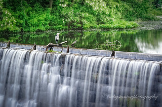 Heron on Waterfall