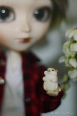 Mrs. Splinter (Chiri's Room) Tags: isul doll pullip cute kawaii hamster pet fofo mouse rat photography p