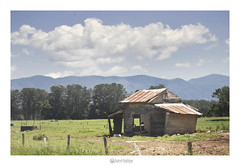 Bellingen - NSW (marcel.rodrigue) Tags: australia newsouthwales jkamidnorthcoast marcelrodrigue photography nature midnorthcoast bellingen