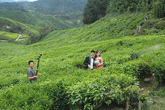 Wedding photos (iparky) Tags: cameronhighlands malaysia wedding tea sungaipalas sungaipalasbohteaestate bohtea