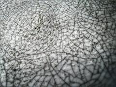We Are All Connected By Design (ThePolaroidGuy [CensoredϟRestricted]) Tags: cracks fractured fractal scratches grooves white black bw color srq sarasota florida heatdamage uvdamage plastic table thepolaroidguy masterphotographer edwarddrakemfa ed edward drake edwarddrake my3rdeye hdr pattern selectivefocus depthoffield 2017 connected surface