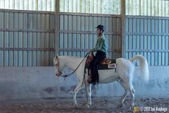 JBC_9318.jpg (Jim Babbage) Tags: krahc annualshow horse bethany horseshow 125