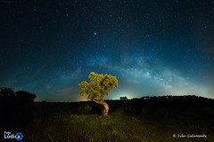The beginning (Iván Calamonte) Tags: night noche light luz víaláctea milkyway estrellas stars extremadura cornalvo natural parque park árbol tree skyscape nightscape nightphotography sky landscape exposure long larga exposición fotoludica nikon d610 samyang