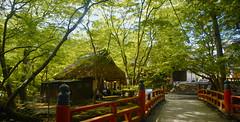 nara (cocytus69) Tags: japan kyoto nara green summer tea house bridge red