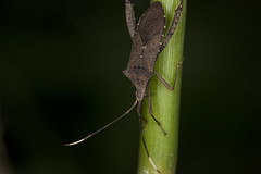 Parque Laje, Rio de Janeiro. (Rod.T28) Tags: parquelaje riodejaneiro nature canon1dsmarkiii macro macrophotography canon100mm28usm insects