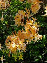 P5102573 (simonrwilkinson) Tags: nymans nationaltrust haywardsheath westsussex handcross gardenplant garden