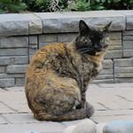 cat 6 8 17 thumbnail