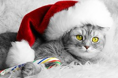 Christmas cat (veronikadenikina) Tags: animals backgrounds birthday cap cats celebration christmas claws closeup clothing concern cute day december decoration domestic event expression eyes felines food friendship fur gift hairy hat holiday kitten light lovable love paw pets pretty purr puss red ribbon seasonal seasons snow soft sugarcandy tabby toy traditional tranquil white winter xmas
