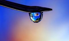 Ocean Droplet (SC-Creations) Tags: macrophotography droplet ocean refraction fish