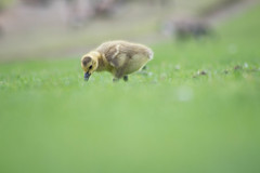 IMG_0107 (jamie minamide) Tags: vacation portland oregon nature outdoors naturallighting animals cute