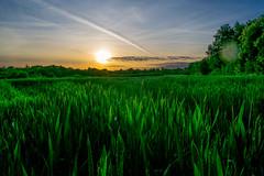 Champs_Vendée-2 (Nikotcho) Tags: vendée champs coucherdesoleil campagne ble cereales