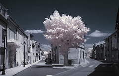 Crossroads (Lolo_) Tags: infrared village 35mm ir charleval provence streets rues infrarouge tree arbre reverbere croisement crossing crossroads france