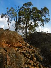 Last hill before dinner (LeelooDallas) Tags: western australia bannister landscape eucalyptus tree rock bush sky cloud dana iwachow nikon s9200