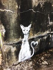 cat graffiti (ekelly80) Tags: azores portugal sãomiguel may2017 teaplantation tea greentea chágorreana walk cat kitty graffiti mural drawing blackandwhite bw wall
