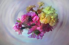 Våreld (evisdotter) Tags: våreld flowers blommor macro 2in1 gimp cartoon myart